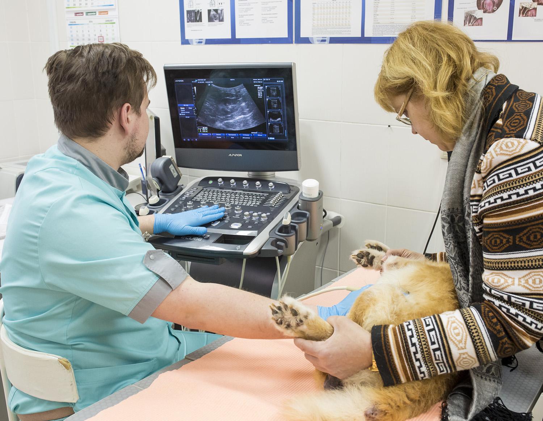Клиника «Доктор Вет» на Скрипникова